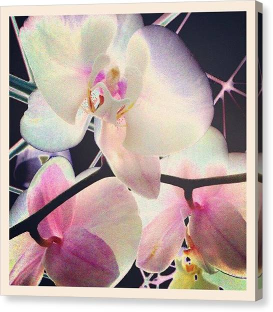 Droid Canvas Print - Hothouse Orchids #android #andrography by Marianne Dow