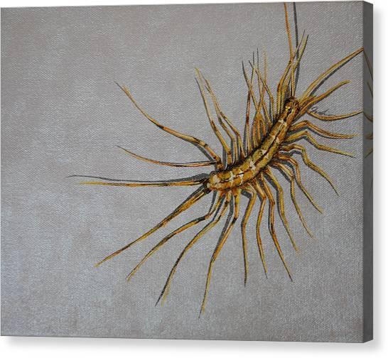 House Centipede Canvas Print