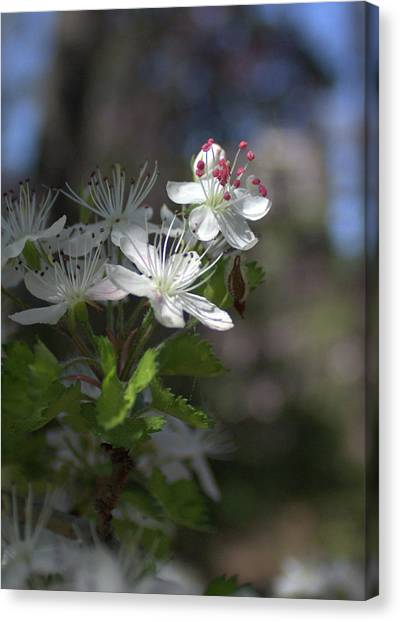 Houston Arboretum Flowers Canvas Print