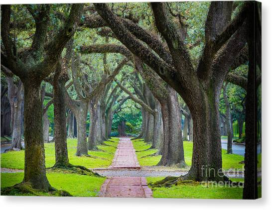 Houston Texans Canvas Print - Houston Trees by Inge Johnsson