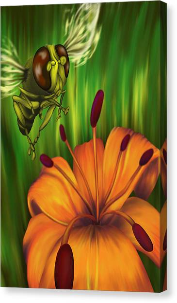 Hover Fly Canvas Print by Tom Wrenn