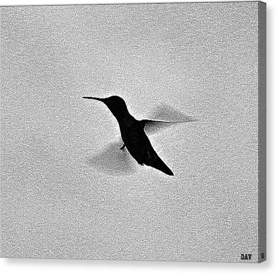 Hover Of The Hummingbird Canvas Print