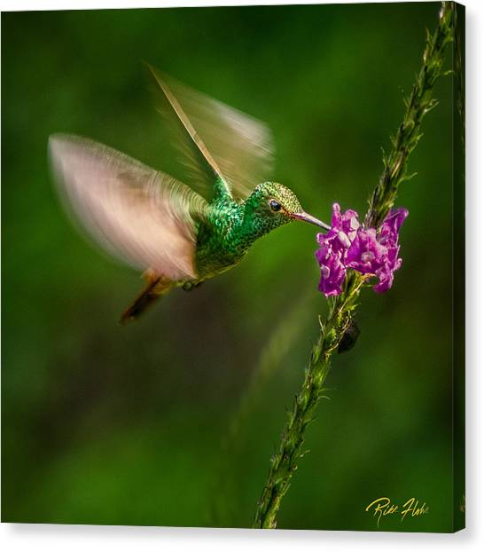 Canvas Print featuring the photograph Hovering In The Vervain  by Rikk Flohr