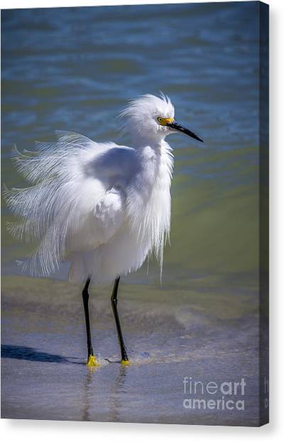 Egret Canvas Print - How Do I Look by Marvin Spates