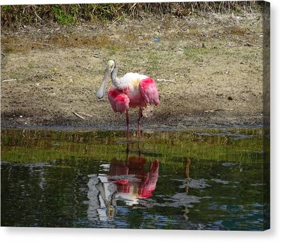 Canvas Print - How Do You Do Mr. Roseate Spoonbill by Red Cross