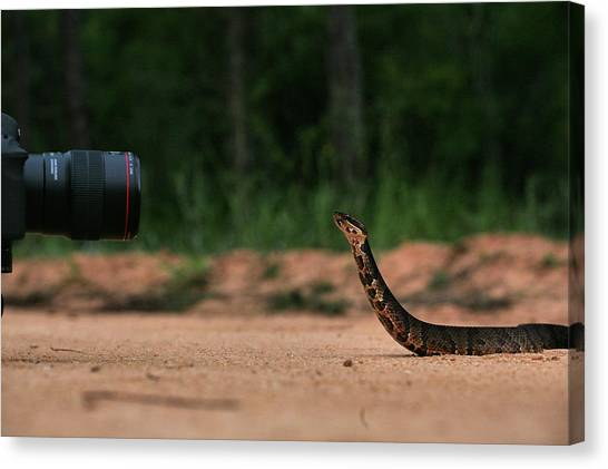 Cottonmouths Canvas Print - How I Shoot Snakes by JC Findley