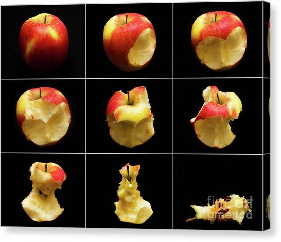 How To Eat An Apple In 9 Easy Steps Canvas Print