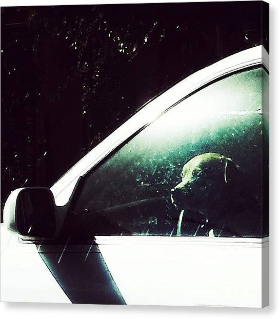 Stoplights Canvas Print - Howl Long Must I Wait  #dogstagram by Casey Asher