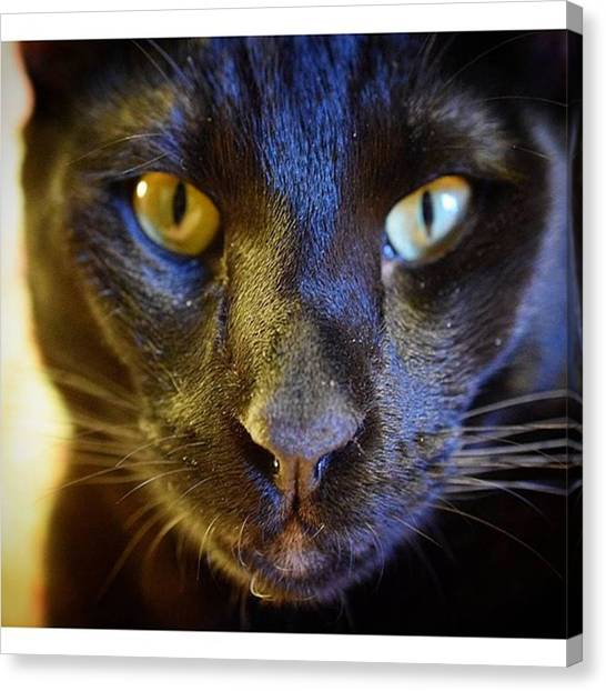 Panthers Canvas Print - How's This For A Panther Face?  #cat by Sirius Black Adventure Cat