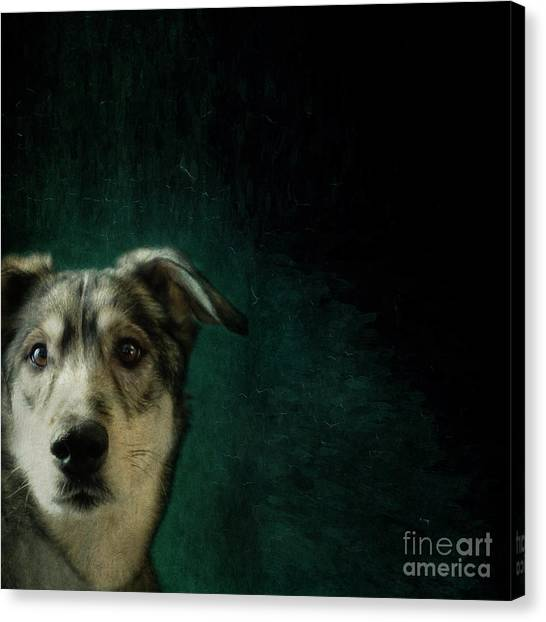 Huskies Canvas Print - Hudson The Husky by Priska Wettstein