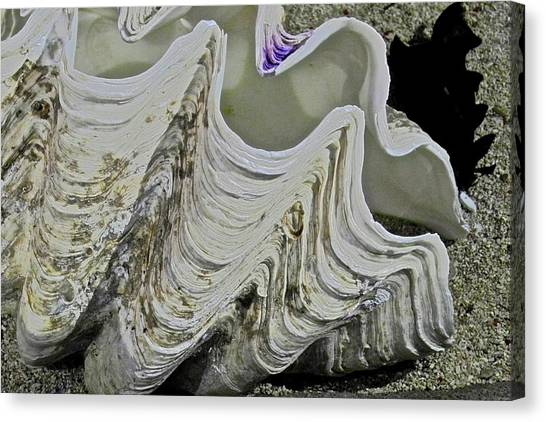 Huge Clam Shell Canvas Print