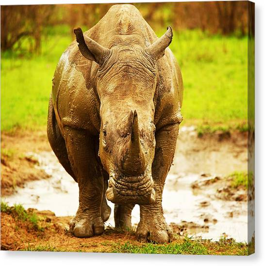 Huge South African Rhino Canvas Print