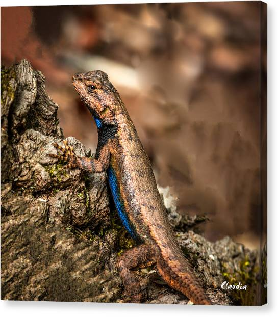 Canvas Print featuring the photograph Hugo The Lizard by Claudia Abbott