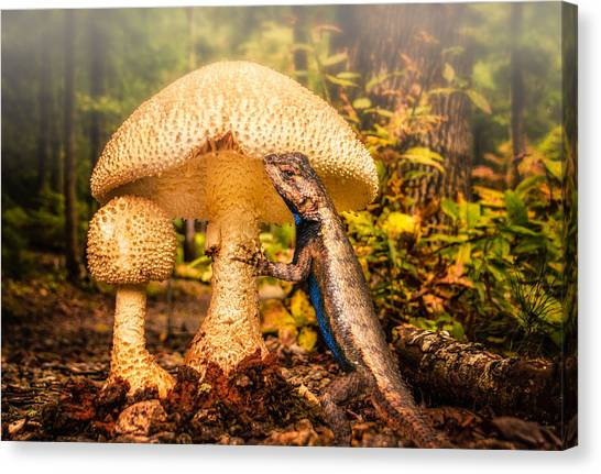 Hugo Under The Toadstool Canvas Print