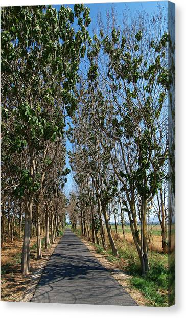 Hula Reserve Country Road Canvas Print by Arik Baltinester