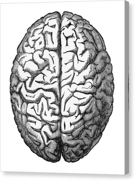 Cerebral Peduncle Canvas Prints | Fine Art America