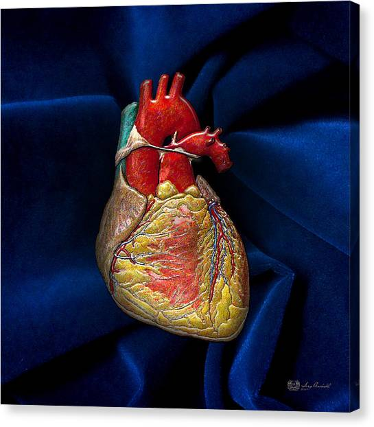 Hearts Canvas Print - Human Heart Over Blue Velvet by Serge Averbukh