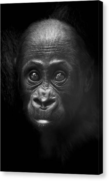 Gorillas Canvas Print - Humanity by Santi Carral