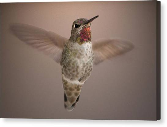 Hummer Love Canvas Print