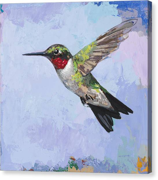 Bird Canvas Print - Hummingbird #3 by David Palmer