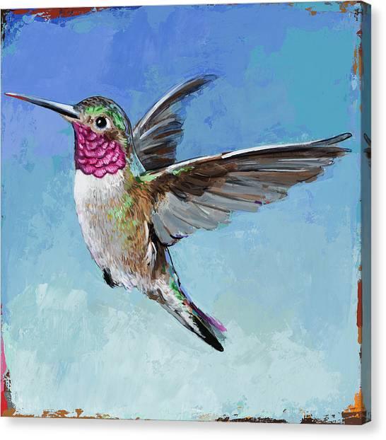 Small Birds Canvas Print - Hummingbird #6 by David Palmer
