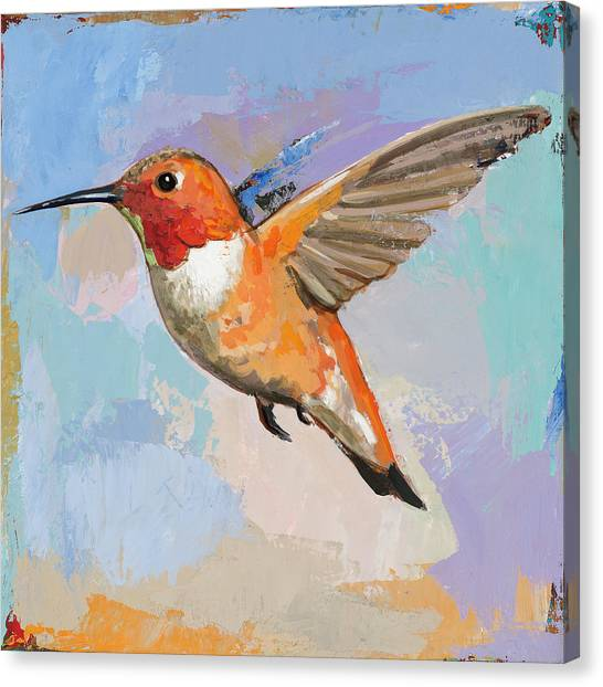 Bird Canvas Print - Hummingbird #7 by David Palmer