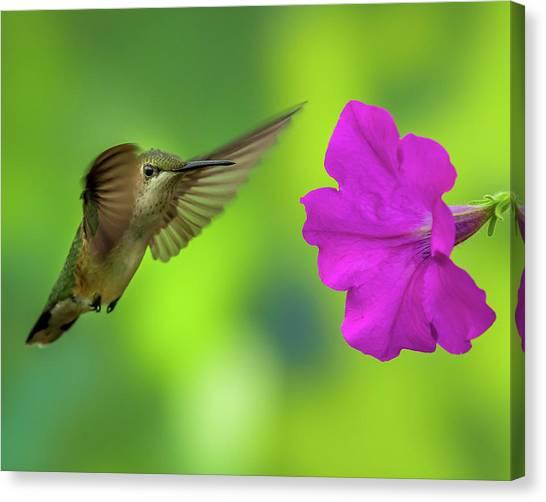 Hummingbird And Flower Canvas Print
