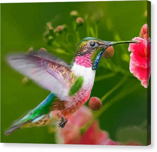 Hummingbird And Flower Painting Canvas Print