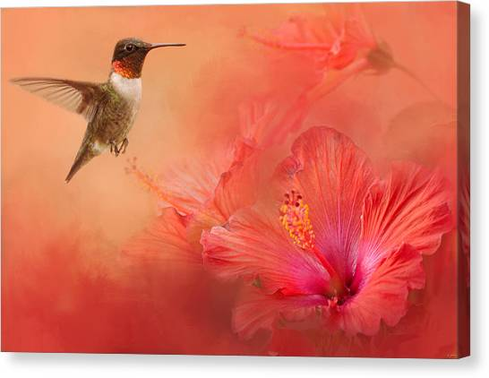 Hummingbird And Peach Hibiscus Canvas Print