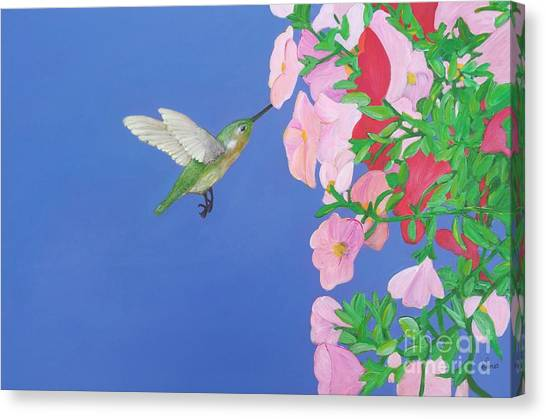 Hummingbird And Petunias Canvas Print