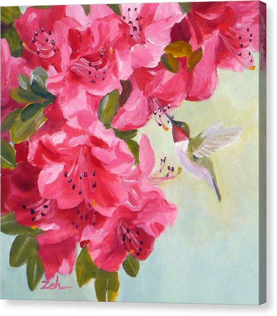 Hummingbird And Pink Azaleas Canvas Print