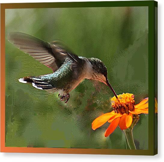 Hummingbird Art Canvas Print