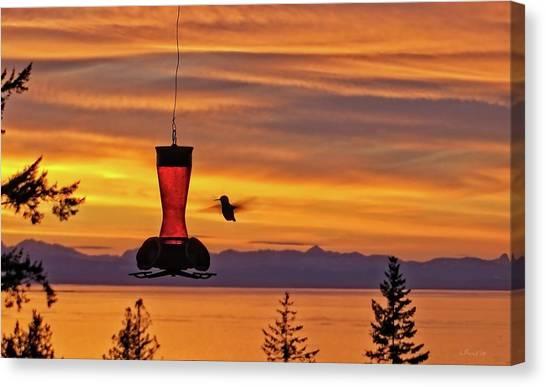 Hummingbird At Sunset. Canvas Print