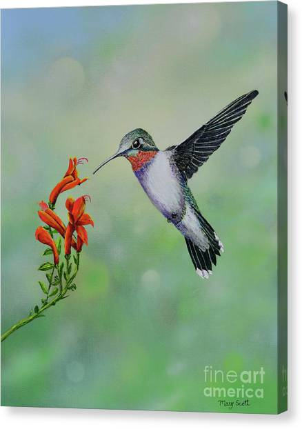 Canvas Print featuring the painting Hummingbird Beauty by Mary Scott