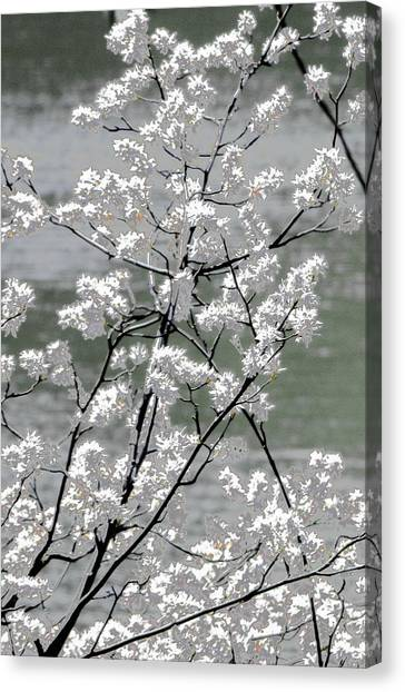 Canvas Print featuring the photograph Hummingbird by EDi by Darlene