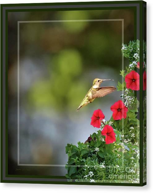 Border Wall Canvas Print - Hummingbird Decor - Framed by Sandra Huston