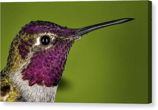 Hummingbird Head Shot With Raindrops Canvas Print