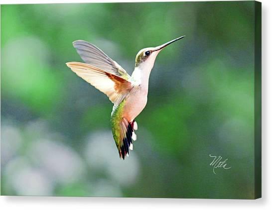 Hummingbird Hovering Canvas Print