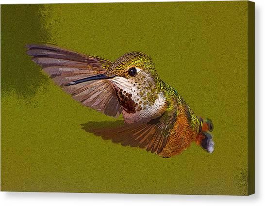 Selasphorus Canvas Print - Hummingbird In Flight- Abstract by Tim Grams