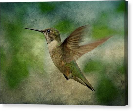 Hummingbird In Flight II Canvas Print