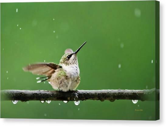 Hummingbird In The Rain Canvas Print