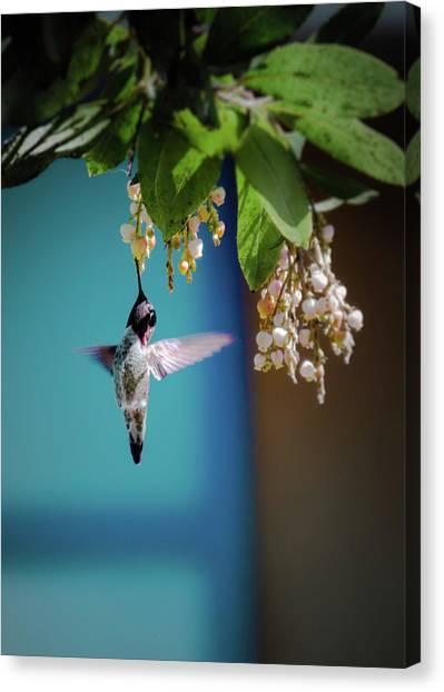 Hummingbird Moment Canvas Print