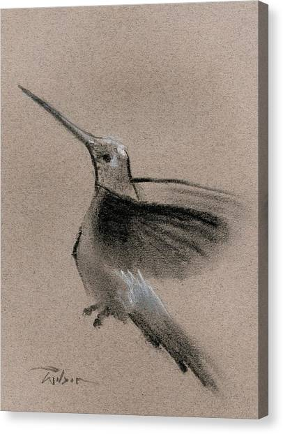 Fine Art Charcoal Rendering Of A Hummingbird In Flight. Canvas Print by Ron Wilson
