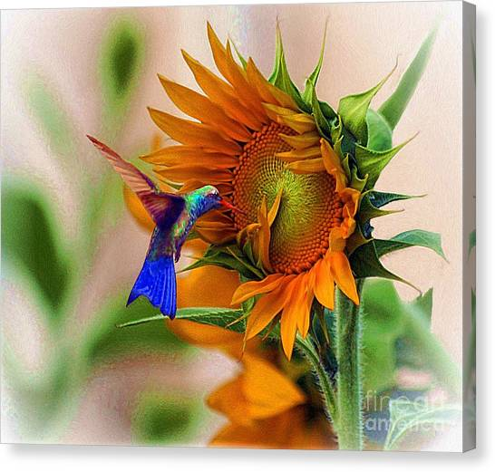 Hummingbird On Sunflower Canvas Print
