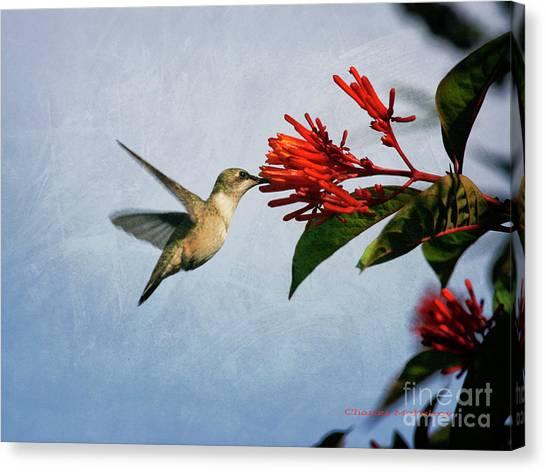 Hummingbird Red Flowers Canvas Print