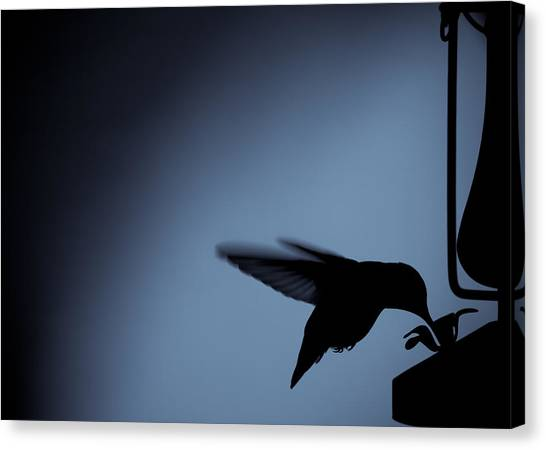 Hummingbird Silhouette Canvas Print by Edward Myers