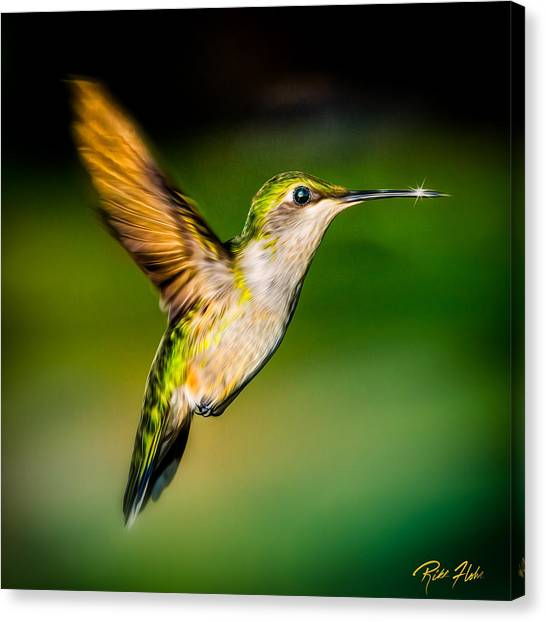 Hummingbird Sparkle Canvas Print