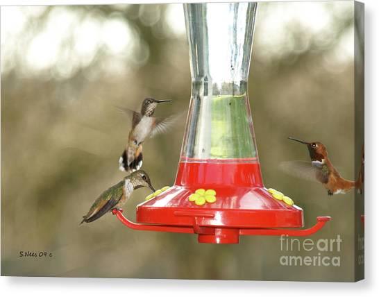 Hummingbird Trio Canvas Print