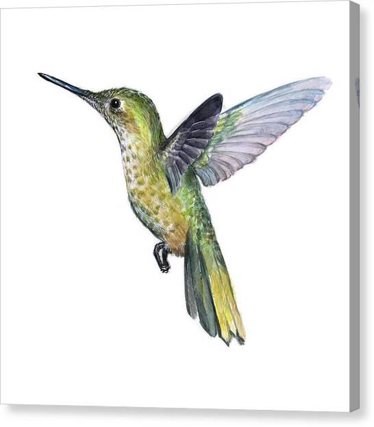 Hummingbirds Canvas Print - Hummingbird Watercolor Illustration by Olga Shvartsur
