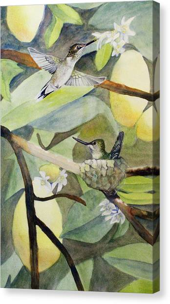 Hummingbirds And Lemons Canvas Print